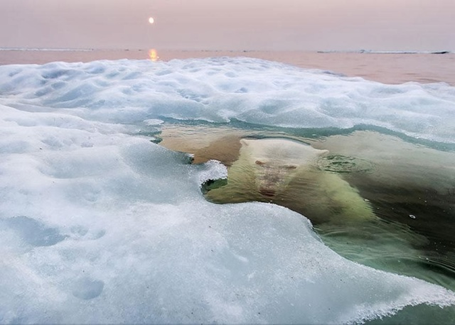 2013 National Geographic Photo Contest winner