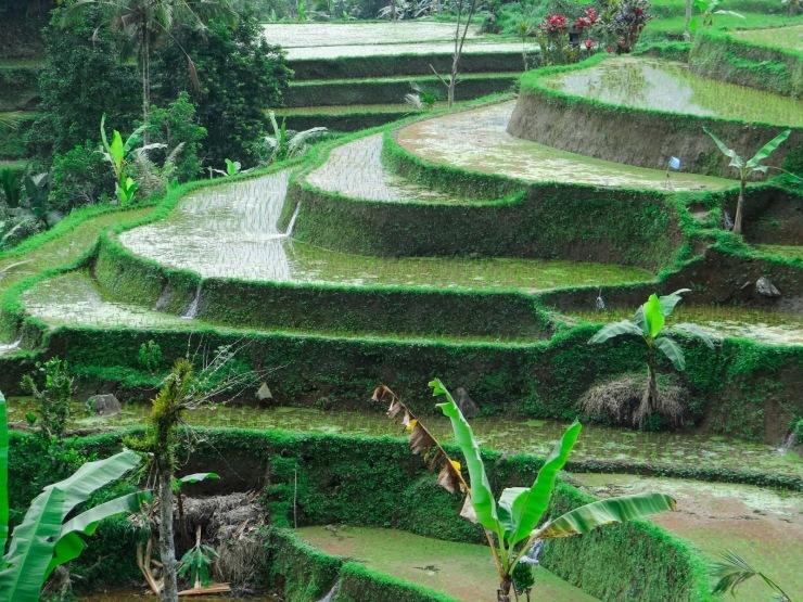 Art Daily Fix Bali (6)