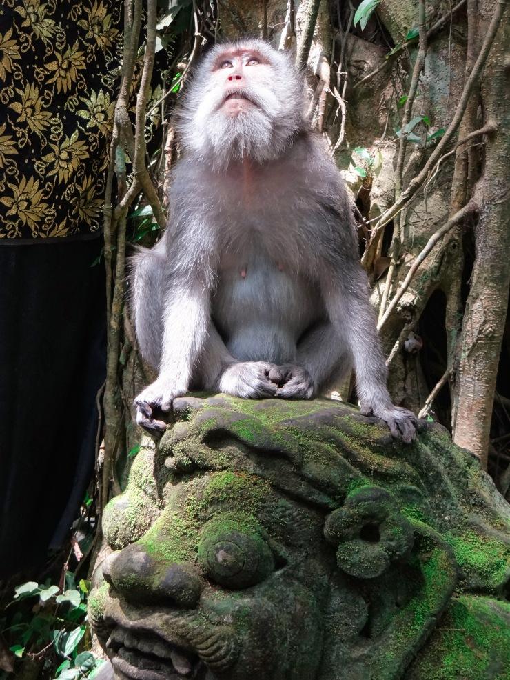 Monkey ForestTemple