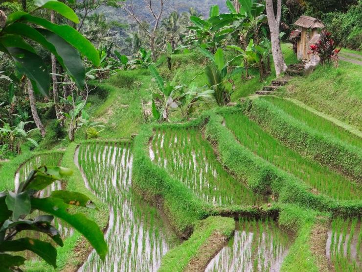 23082014-Bali Lombok 2014 (247)