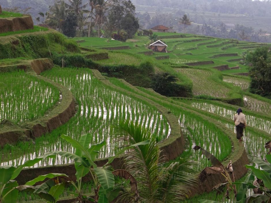 23082014-Bali Lombok 2014 (256)